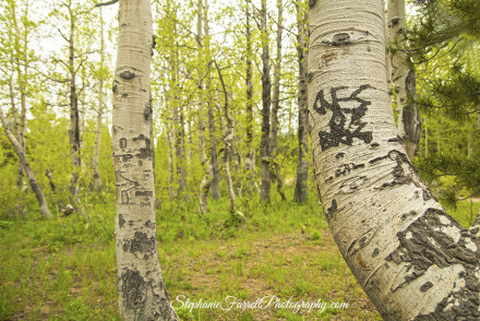 Aspen-High-Sierra-Carson-Pass-Kirkwood-grafitti--stephanie-farrell-photography-2015
