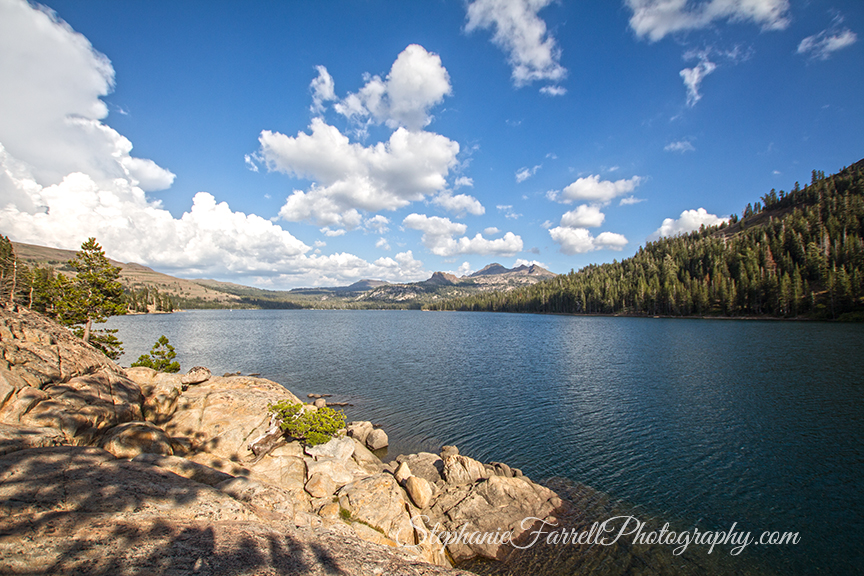 IMG_8399-highway-88-caples-lake-nature-photographer-stephaniefarrell-2015