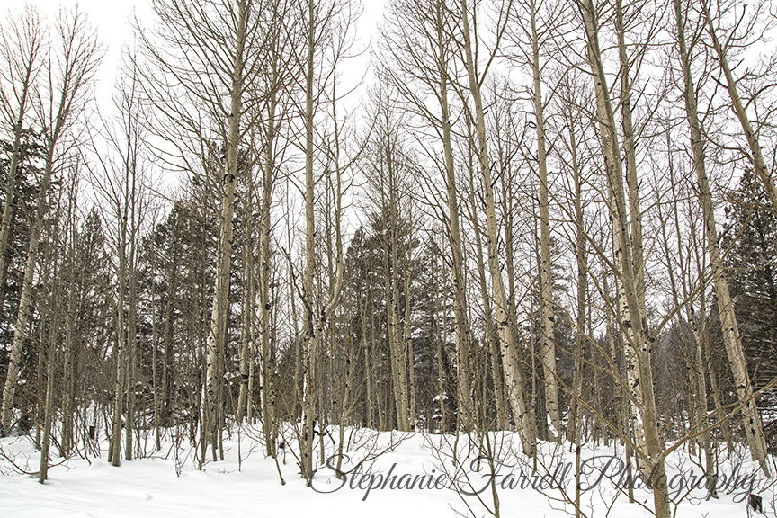 Lake-tahoe-snow-aspens-hope-valley-stephanie-farrell-photography-2015-IMG_5193
