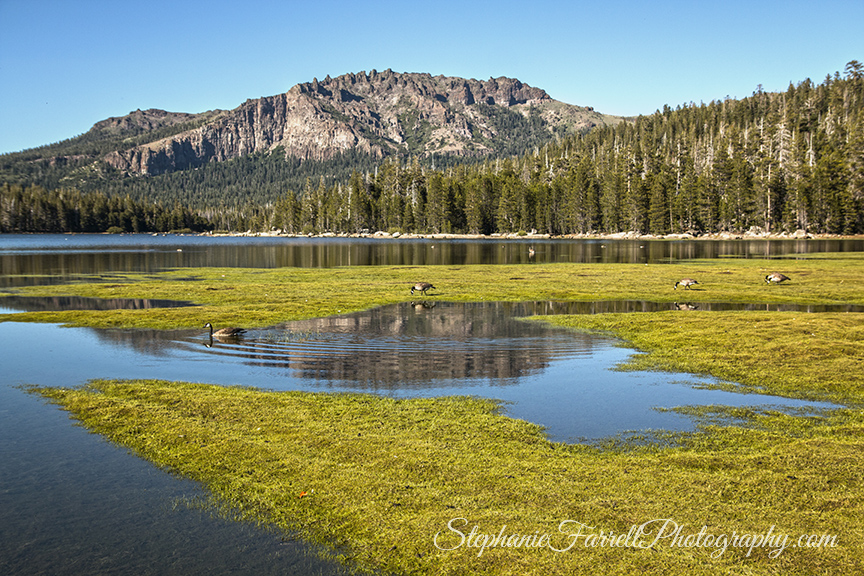 Silver-Lake-reflections-amador-2016-IMG_7909