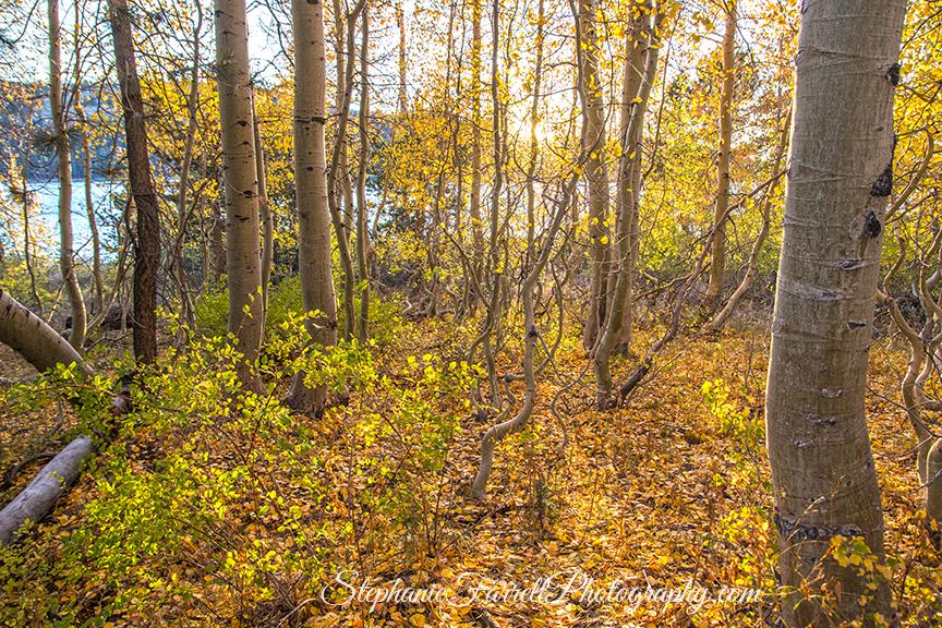 kirkwood-fall-leaves-amador-county-2016-img_1916