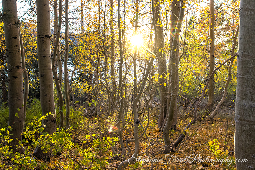 kirkwood-fall-leaves-amador-county-2016-img_1920