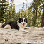 IMG_9605-doggie-mountains-kirkwood-stephanie-farrell-2015-buster