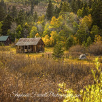 IMG_9611-hope-valley-california-cabin-fall-2015-stephanie-farrell