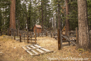 IMG_9874-carson-pass-high-sierras-stephanie-farrell-photography-2015
