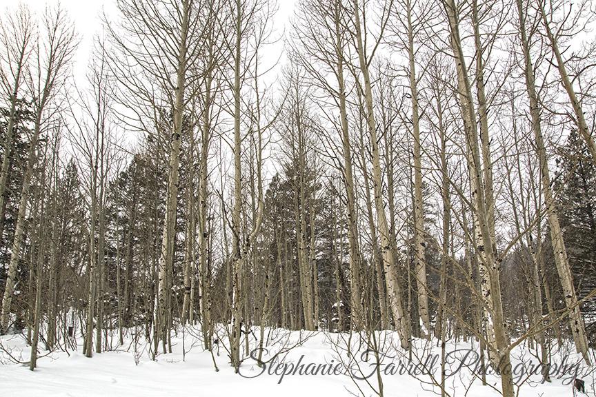 Lake-tahoe-snow-aspens-hope-valley-stephanie-farrell-photography-2015-IMG_5193