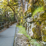 IMG_0288-burney-falls-california-2016-trail