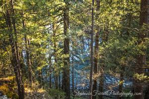 IMG_0302-burney-falls-california-2016-trail-view-through-the-trees