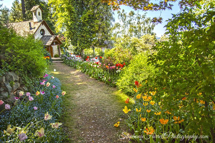 IMG_0449-crystal-hermitage-garden-anonda-nevada-city-2016-tulip