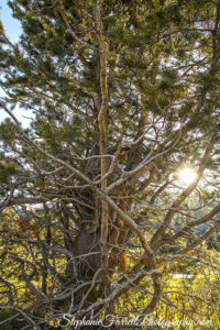 tree-sun-hope-valley-2016-stephanie-farrell-IMG_6306