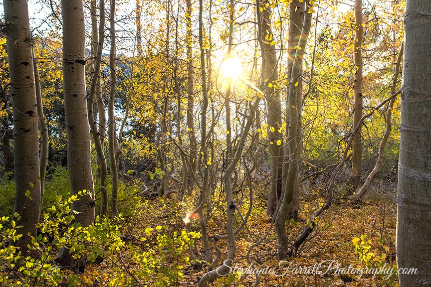 kirkwood-fall-leaves-amador-county-2016-img_1920