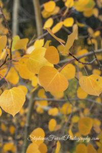kirkwood-fall-leaves-amador-county-2016-img_1950-vibrant