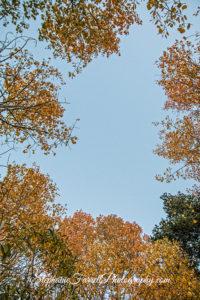 kirkwood-fall-leaves-amador-county-2016-img_1957